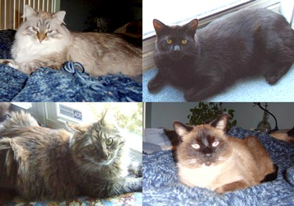 Several of the Johl family cats